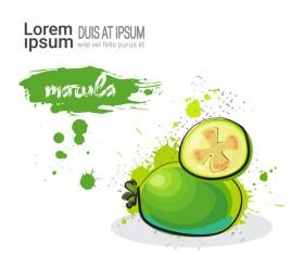 marula watercolor drawn vector