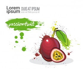 passionfruit watercolor drawn vector