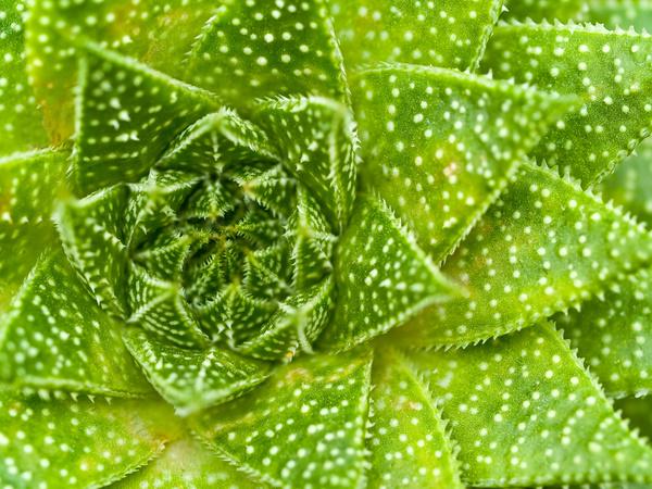 predaceous plants Stock Photo 08