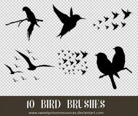 10 Kind Bird Photoshop Brushes