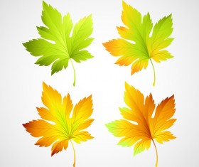 4 Kind maple leaves vector illustration