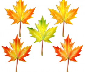 5 Kind maple leaves vector illustration