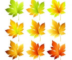 6 Kind maple leaves vector illustration