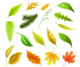 Autumn leaves set vector 01