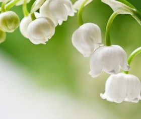 Beautiful bell orchid Stock Photo 03