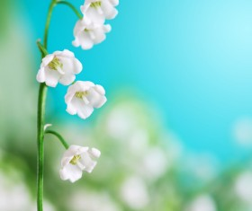 Beautiful bell orchid Stock Photo 05