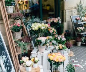 Beautiful fresh flowers in shop Stock Photo