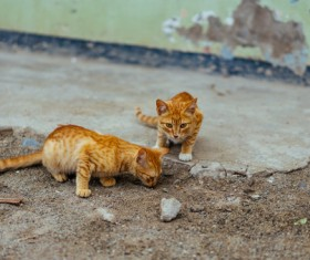 Cute yellow kitties playing outdoor Stock Photo