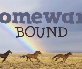 DK Homeward Bound II fonts