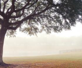 Foggy farms Stock Photo