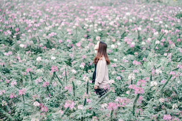 Girl standing in the flowers Stock Photo