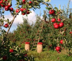 Harvested orchard Stock Photo