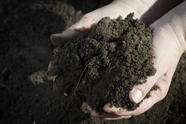 Holding soil Stock Photo