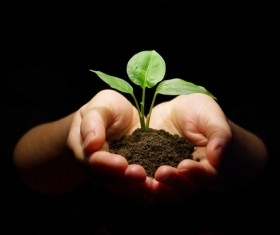 Holding soil seedlings Stock Photo 01