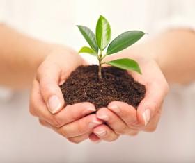 Holding soil seedlings Stock Photo 02
