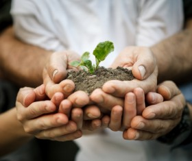 Holding soil seedlings Stock Photo 03
