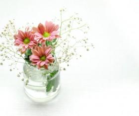 Hydroponic flowers Stock Photo
