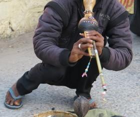 India tame snake Stock Photo
