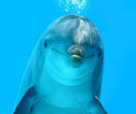 Lovely dolphins Stock Photo