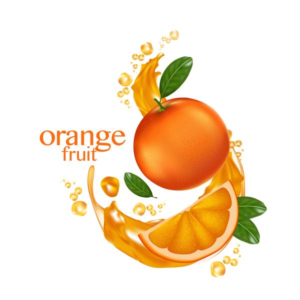 Orange fruit vector illustration 02