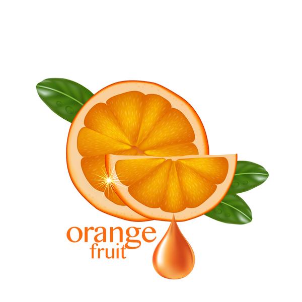 Orange fruit vector illustration 03