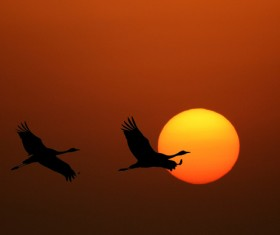 Rising sun with flying birds Stock Photo