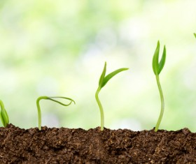 Seed growing process Stock Photo