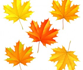 Set of autumn maple leaves illustration vector