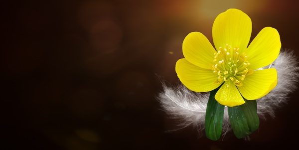 Small yellow flower stock photo free download small yellow flower stock photo mightylinksfo