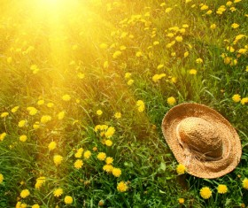 Straw hat on wildflower meadow Stock Photo