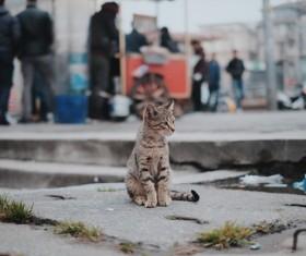 Street stray cat Stock Photo