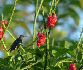 The hummingbirds on the branches Stock Photo