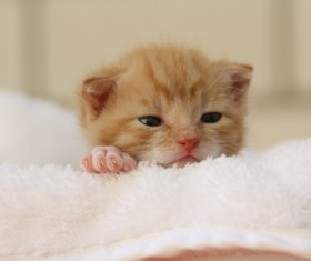 The little kitten on the sheets Stock Photo