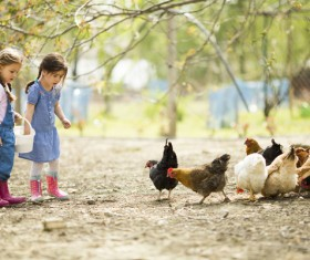 Two little girls feed chicks Stock Photo