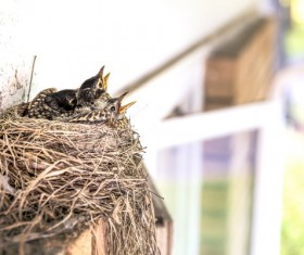 Under the eaves of the nest Stock Photo