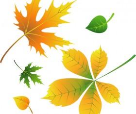 Various autumn leaves illustration vector set 01