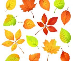 Various autumn leaves illustration vector set 02