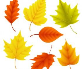 Various autumn leaves illustration vector set 03