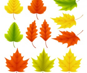 Various autumn leaves illustration vector set 04