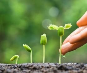 Watering seedlings Stock Photo