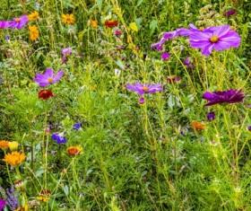 Wild wildflowers on the mountain Stock Photo