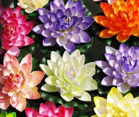 beautiful flower Stock Photo 02
