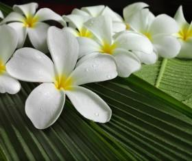 beautiful flower Stock Photo 03