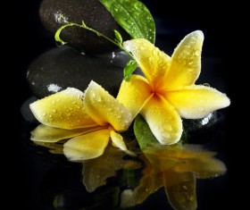 beautiful flower Stock Photo 04