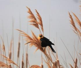 cute small bird perching wild grass Stock Photo