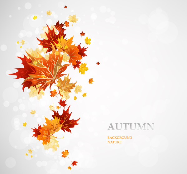 simple autumn leaves background vector