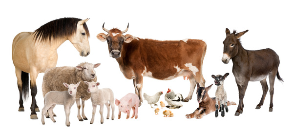 All kinds of farm animals Stock Photo 01