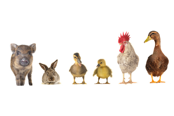 All kinds of farm animals Stock Photo 02