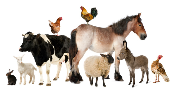 All kinds of farm animals Stock Photo 03