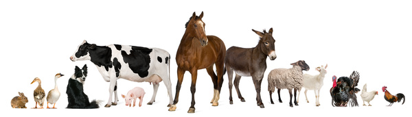 All kinds of farm animals Stock Photo 04